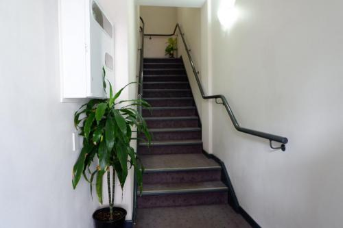 Entrance stairs